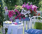 Petunia 'Supertunia Lavender Pink' 'Conchita Blueberry Frost'