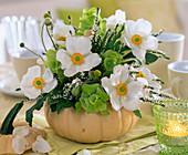 Anemone japonica (autumn anemone)