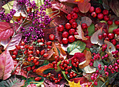 Close-up still life with ornamental apples and leaves
