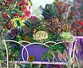 Brassica (ornamental cabbage), Panicum 'Rehbraun' (rodent millet)