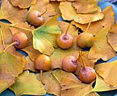 Ginkgo biloba (ginkgo leaves and fruits)