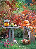 Cucurbita, pumpkins, males and figures