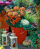 Chrysanthemum (Chrysanthemen), Brassica (Zierkohl), Acorus ' Ogon '