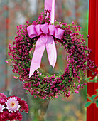 Hanging wreath of Erica gracilis (pottery) with pink bow