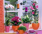 Window with flowering plants in orange and pink pots