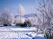 Garden landscape with snow and hoarfrost