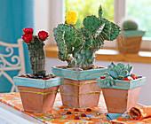 Opuntia (prickly pear cactus), Echinocereus (cereus cactus)