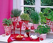 Salvia 'Icterina' (sage), Thymus vulgaris and Citriodorus