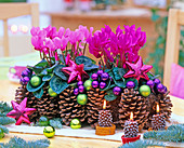 Cyclamen persicum with cones, cone candles, tree decorations