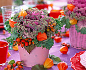 Brassica, Physalis, Rose, Rose tin pot
