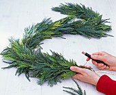 Coniferous garland at the window