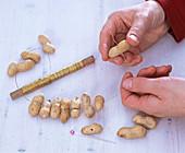 Peanut garland