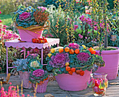 Brassica (ornamental cabbage), Calluna (budding heather), Senecio