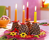 Pinus pinea, Chamaecyparis, colorful bar candles