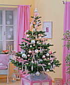 Abies nordmanniana, as a Christmas tree with white candles