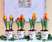 Tulipa 'Flair' in white, heart-painted pots
