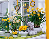 Narcissus 'Tete a Tete' 'Bridal Crown', Primula acaulis