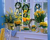 Yellow window, Narcissus 'Tete A Tete' (Daffodil), Primula