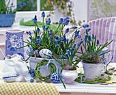 Muscari (grape hyacinth), Cornus wreaths