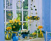 Primula acaulis and Elatior (primrose), Narcissus