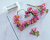 Waxflower heart