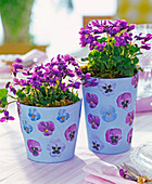 Fragrance violets in pots with napkin technique