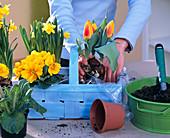 Plant light blue woodchip basket