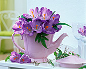 Purple crocus (Crocus) in pink jug, tendril of jasmine (jasmine)