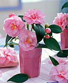 Pink camellia (camellia) in pink vase, flowers