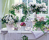 Arrangement with white flowering Rhododendron simsii, houseplants