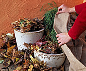 Put tulips and daffodils in bucket in autumn