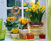 Narcissus 'Tete á Tete', Tulipa, Primula