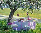 White metal seat group under flowering malus (apple tree)