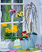 Ranunculus on the windowsill, Bellis