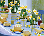 Table decoration with Narcissus in checkered planters