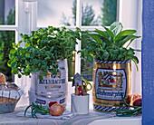 Herbs in beer kegs on the windowsill nasturtium