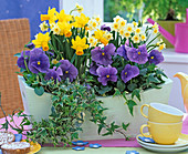 Pastel green wooden box plant with narcissus and viola