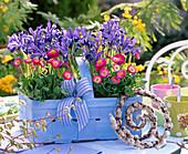 Iris reticulata 'Pixie' (Netziris), Bellis (daisies)
