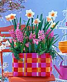 Narcissus 'Honkey' (Daffodil), hyacinthus (pink hyacinth)