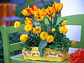 Tulipa 'Flair', Ranunculus asiaticus 'Bloomingdale'
