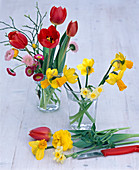 Narcissus (narcissus) put in extra vase for some time