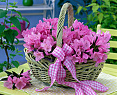 Pink rhododendron in light green handle basket on the table