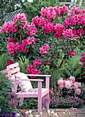 Pink wooden armchair of blooming rhododendron