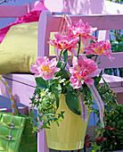 Tulipa 'Peach Blossom' (Stuffed Tulips), Hedera (Ivy)