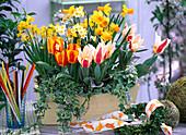Tulipa 'Flair', 'The First', Narcissus 'Jetfire', 'Minnow'