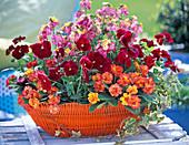 Red-orange planted basket, Viola (pansy), Primula