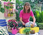 Plant the yellow box with fuchsias
