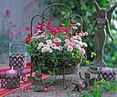 Bellis in basket, flowers, Clematis tendril
