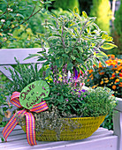 Herb basket on bench with salvia as trunks, rosemary