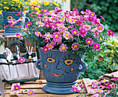 Argyranthemum frutescens (Marguerite) in blue pot with face
